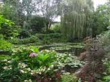 Jardin d'eau - Nénuphars